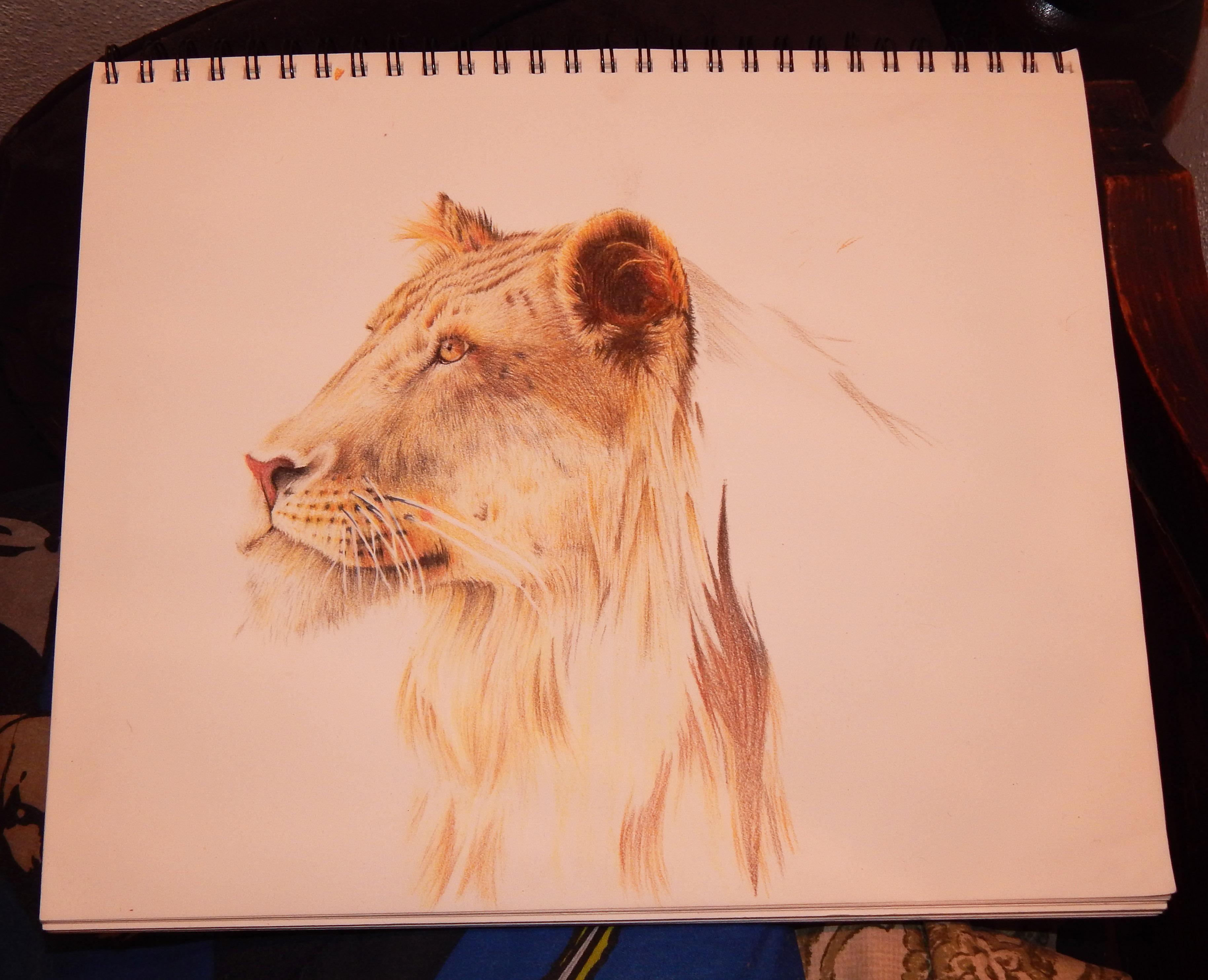 Work in Progress #3 - Lion